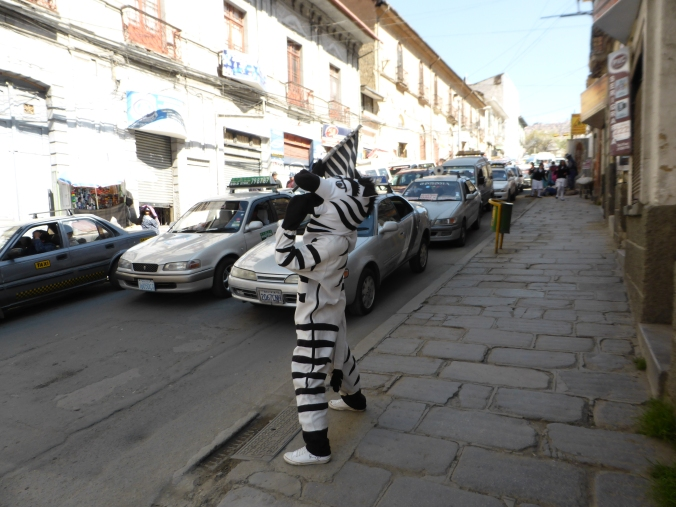 Zebras trying to teach Bolivian drivers to stop in front of the zebra crossing (it's not working).