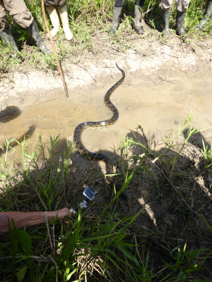 Anaconda Rurrenabaque