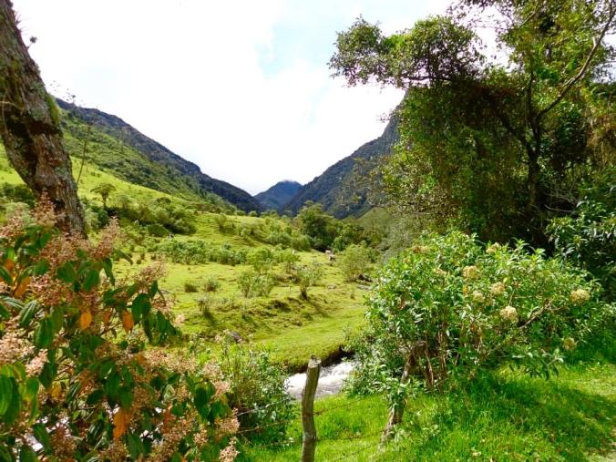 Valle de Cocora/Cocora Valley
